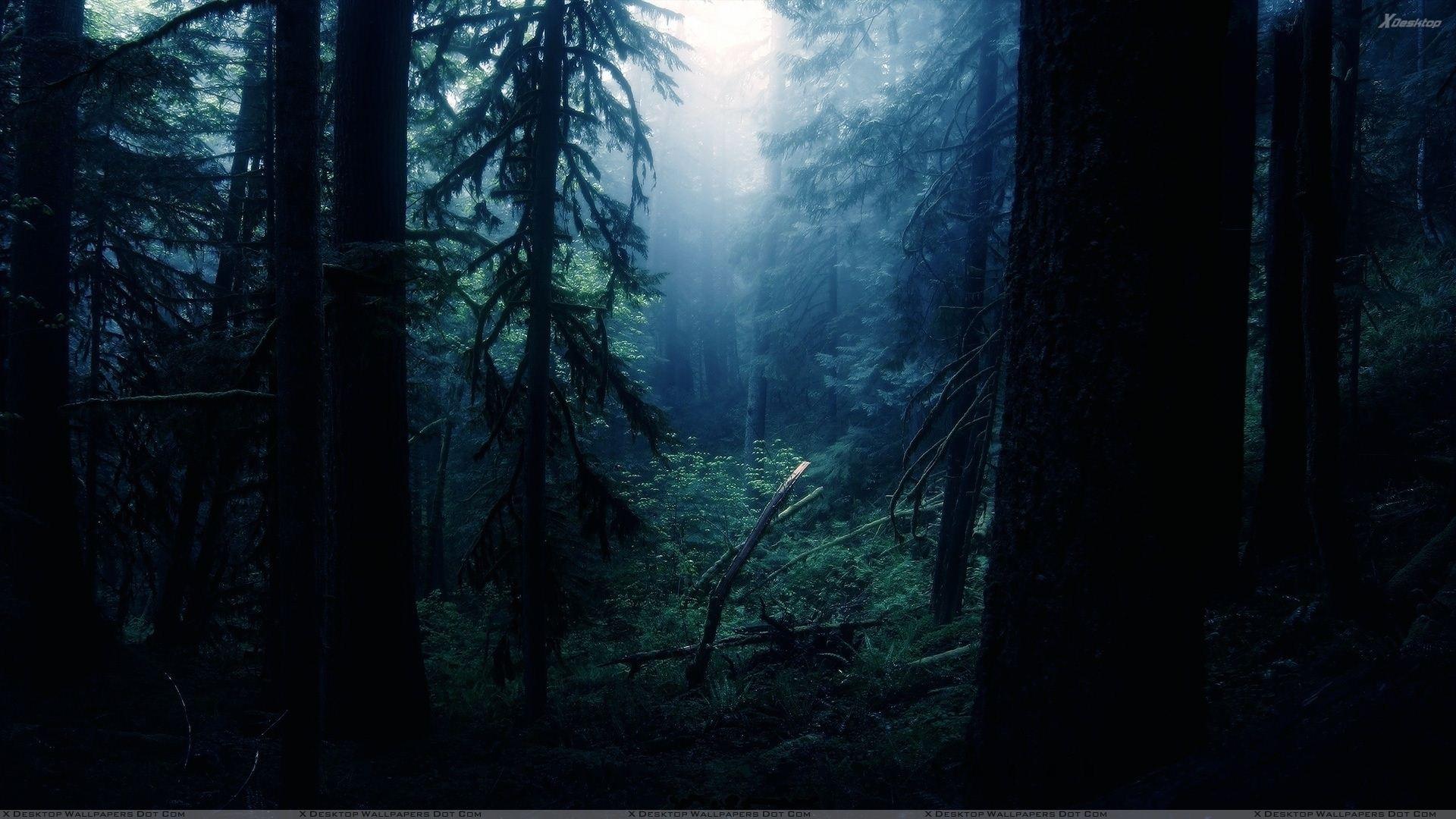 dark-forest-hd-8